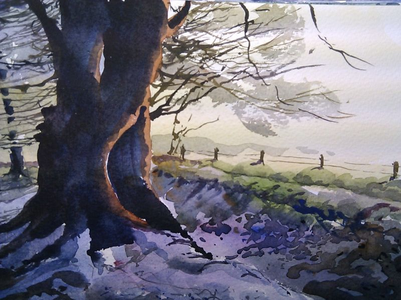 Cotswolds_old_tree