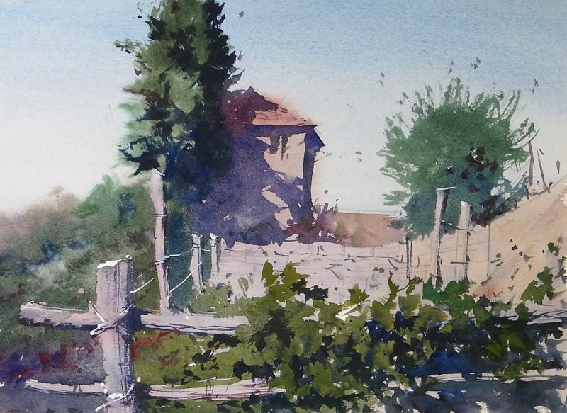 Old Vineyard Monte dei Bianchi